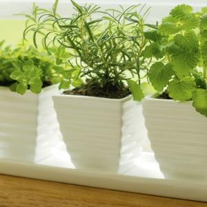 Вирощуванння овочів та зелені в домашніх умовах