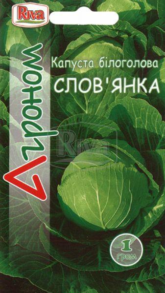 Капуста білоголова Слов'янка
