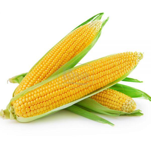 Кукурудза Брусниця