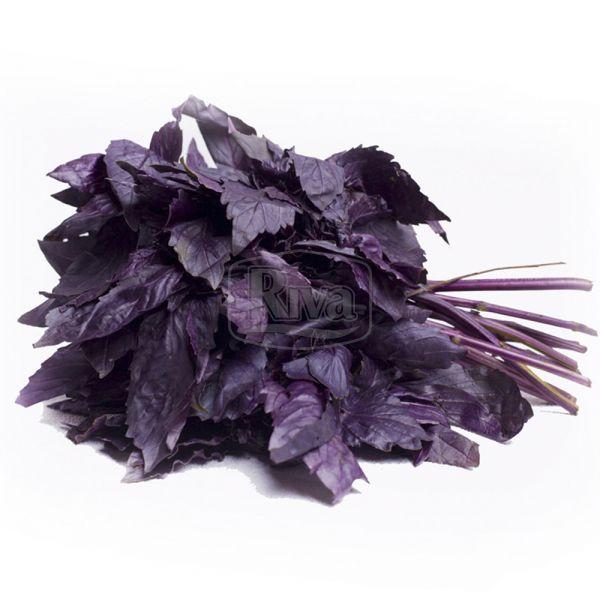 Базилік фіолетовий