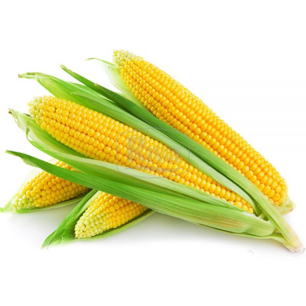 Кукурудза Ароматна