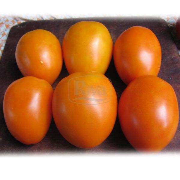 Томат Биче серце оранжеве