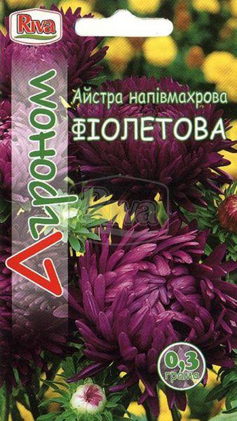 Айстра напівмахрова фіолетова