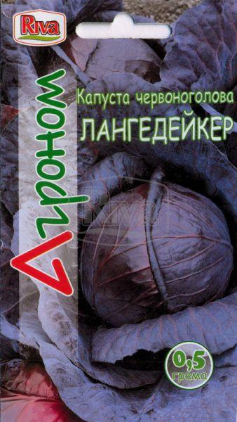 Капуста червоноголова Лангедейкер