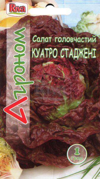 Салат головчастий Куатро Стаджені