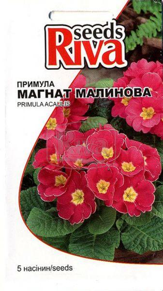 Примула Магнат Малинова