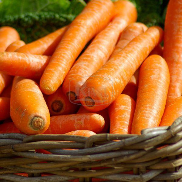 Морква Каміла